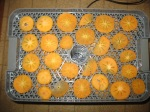 persimmons, dehydrator, dried persimmons